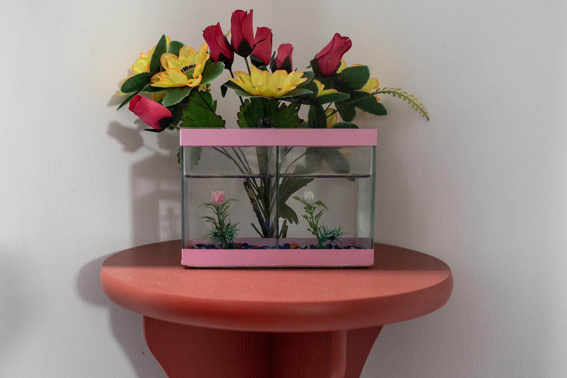 Aquário sem peixes decora a cozinha de Aline. Ela encontrou o aquário na casa de Murilo e ganhou o objeto de presente. Agora, está em processo de decisão sobre ter peixes Beta como companhia.
